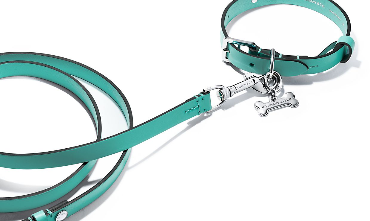 Dog Collar Tiffany Blue