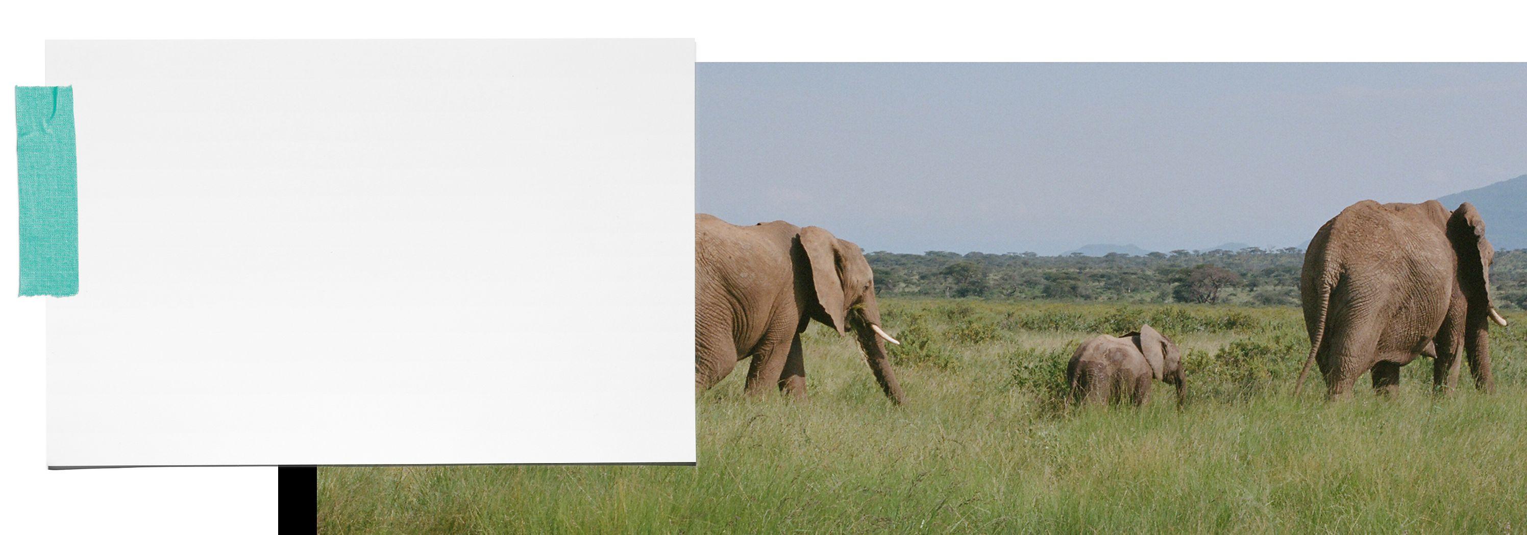 Tiffany & Co. Tiffany Save the Wild
