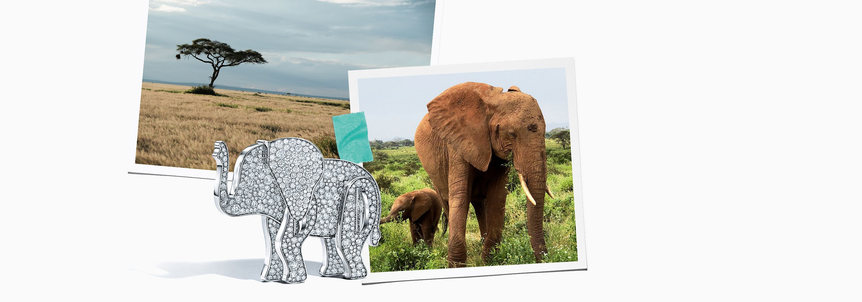 Tiffany & Co. Save the Wild